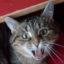 Drottning Katt